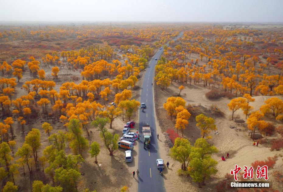 新疆塔里木河两岸胡杨秋色美 吸引众多游客