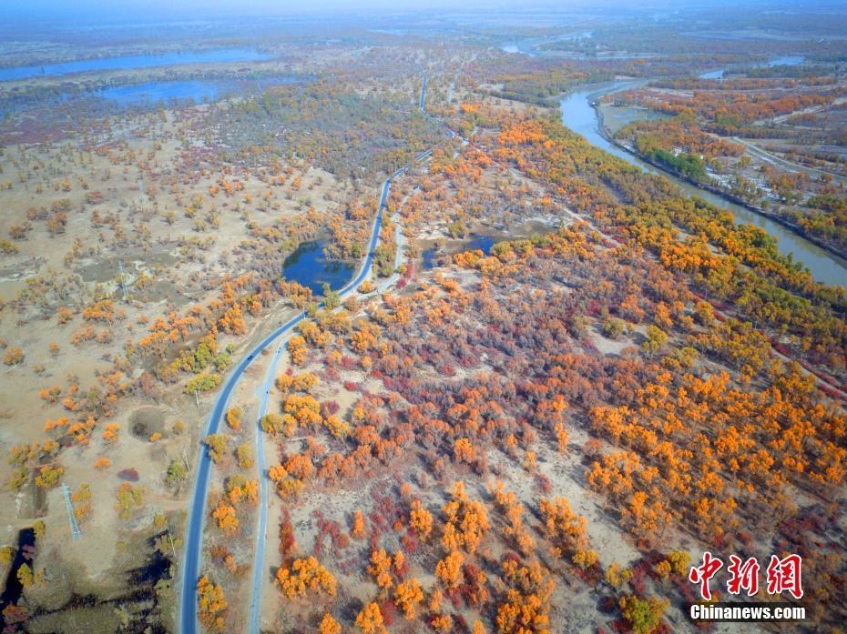 新疆塔里木河两岸胡杨秋色美 吸引众多游客 4