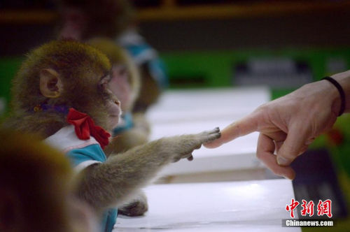 英国残忍动物实验:猴子开脑、羊胚胎植入监视器