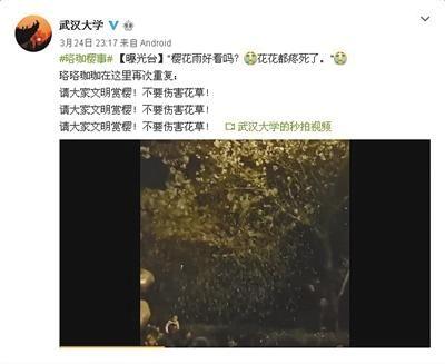 """24日23时许,武大官微曝光游客摇树制造""""樱花雨""""的视频。 视频截图"""