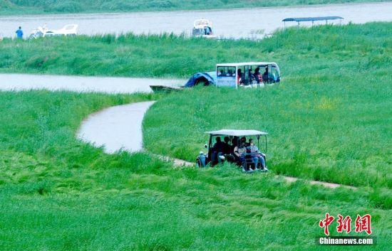 """雨季来临湖水上涨 鄱阳湖畔现最美""""水上公路"""""""