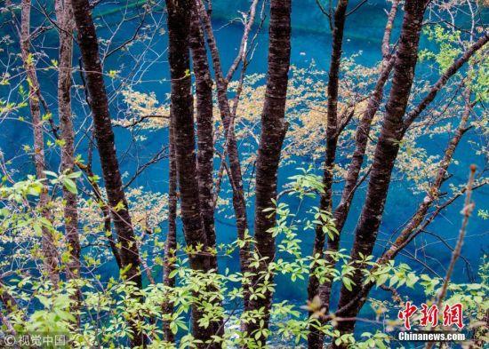 实拍九寨沟震后第一个春天 还是记忆中的童话世界