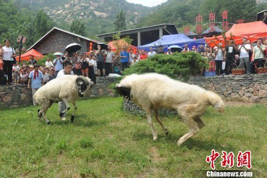 澳门银河国际娱乐官网沂源借力伏羊文化节树立品牌 助推乡村旅游发展