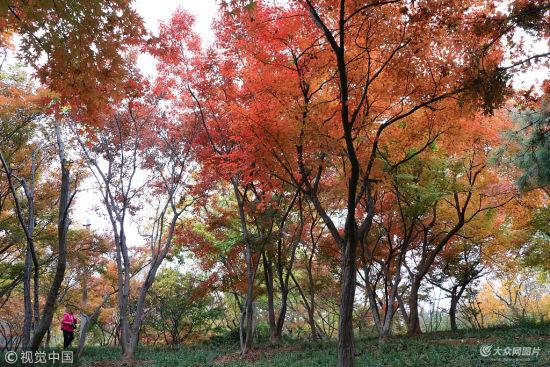 济南泉城公园 色彩斑斓宛如画作
