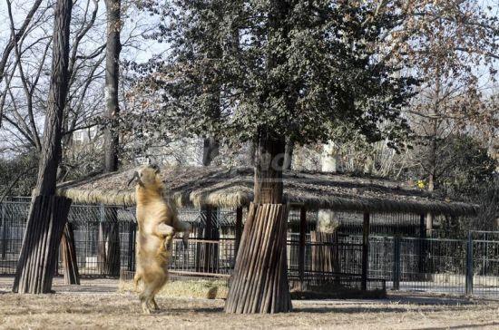 济南动物园新生动物齐亮相