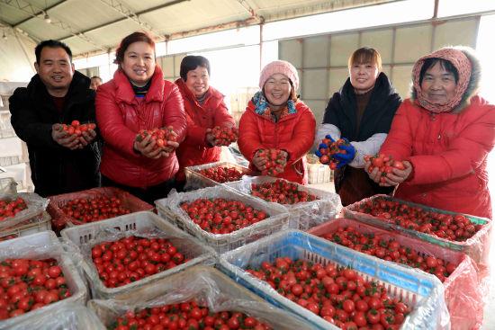 在農行惠農E貸貸款支持下,蔬菜喜獲豐收。菜農在蔬菜收購點銷售櫻桃西紅柿。