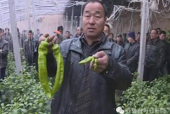 耿大哥向记者展示两种辣椒的差别