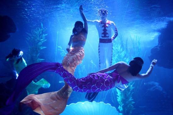 青岛的海底世界_青岛海底世界:普及海洋知识 构筑蓝色文明