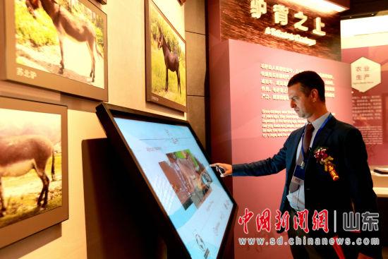 图为外国学者参观毛驴博物馆。梁�� 摄