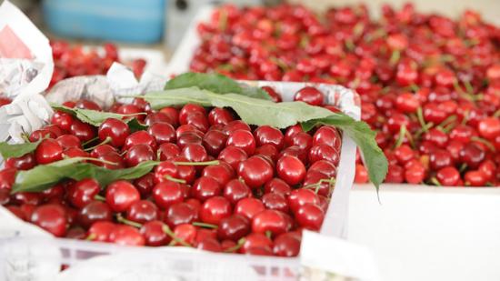 山东邹城成功举办第三届大樱桃全国产销对接会
