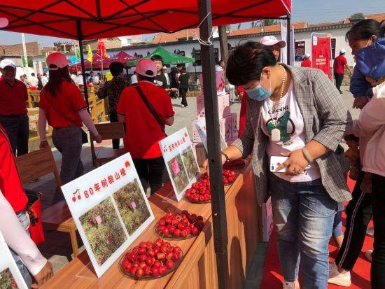 """新泰2万亩山楂获丰收 """"小红果""""成就致富大产业"""
