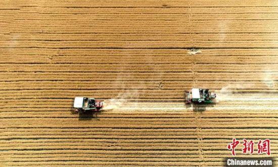 (资料图)山东2020年小麦丰收现场。 沙见龙 摄