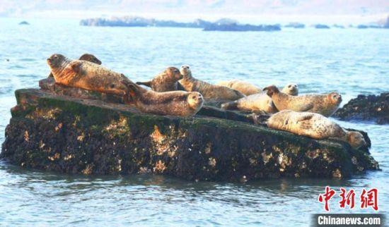 太平洋斑海豹 长岛宣传文化和旅游部供图