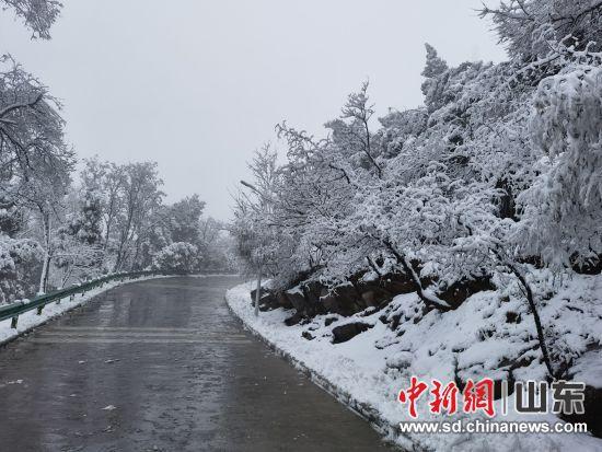 2月25日,2021年农历春节后的第一场大雪不期而至,将整个原山国家森林公园装扮的银装素裹,分外妖娆。一片片晶莹的雪花飘落,附着在枝头、山峦,远远望去,宛如一个梦幻般的童话世界。雪后的原山吸引了许多游客的到来。