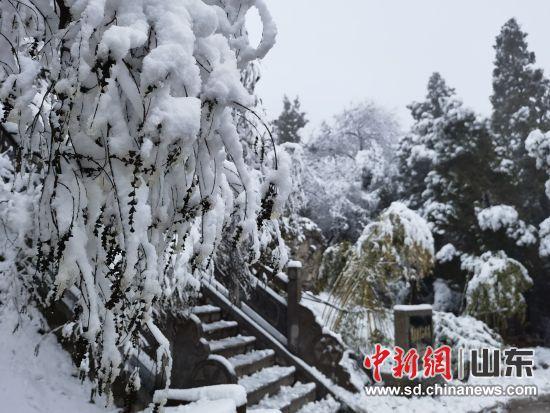 原山林场迎来降雪。