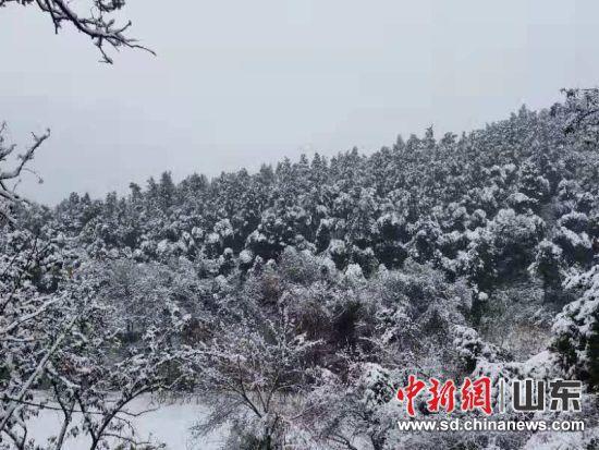 远山林场迎来降雪。