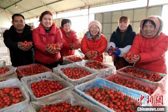 菜农在蔬菜收购点销售樱桃西红柿。 王殿昌 摄