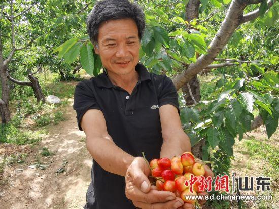 果农李圣珂捧出甜甜的樱桃让人品尝。柳萍 摄