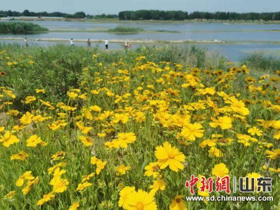 大汶河湿地美如画。刘小敏 摄
